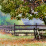 Foggy country scene in autumn