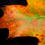 Close up of autumn leaf