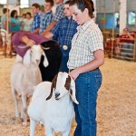 4H Goat Judging: At the Montgomery County Fair