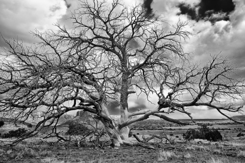 Tree photo in black and white