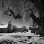 Black and white of small town tree in NM