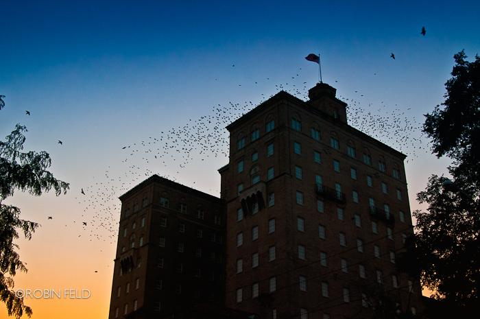 Birds and silhouetted building at dusk