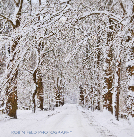 winter photo of snowy tree-lined road