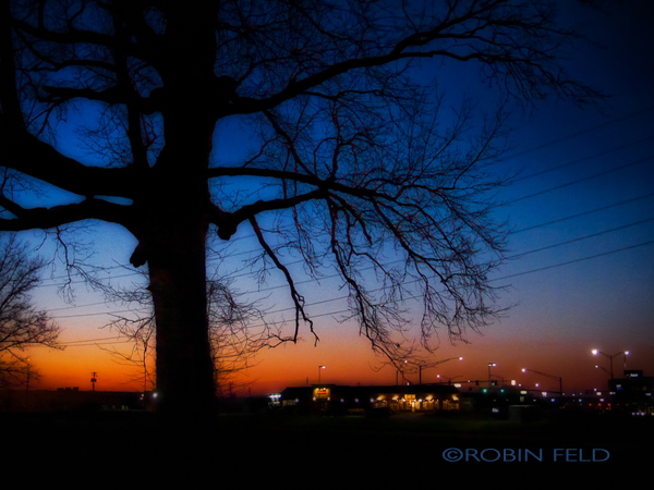 tree-silhouette--city-l-ights-9