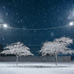 Snow covered trees- city