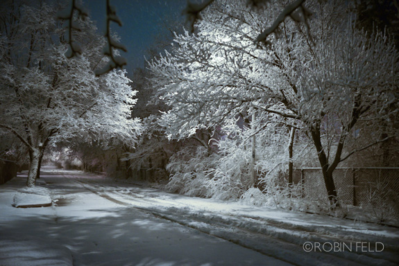 Snow-covered trees lining the street at night