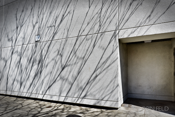 Shadows of tree on wall