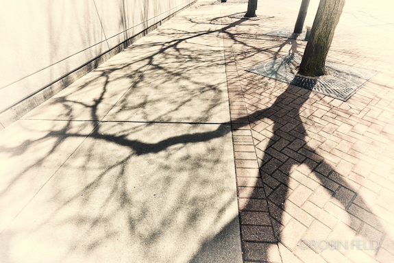 Tree shadows on sidewalk