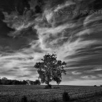 scenic-tree-black-and-white