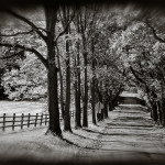 Black and white photo of country road