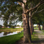 Tree lined path by river