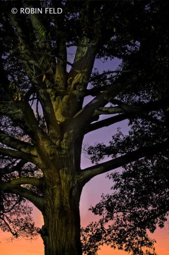 Tree Art- at dusk