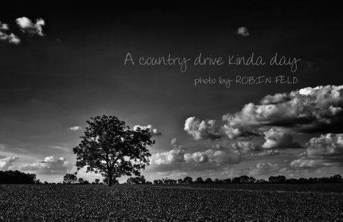 Country scene in black and white