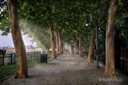 Tree lined walk path with sunlight